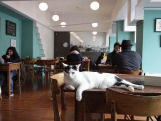 A cat bar