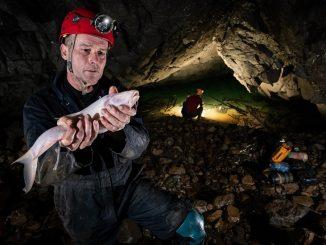 blind-cavefish-meghalaya-caves