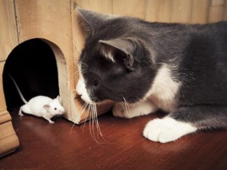 Tips to make your pet rat and cat get along